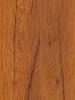 dub sokalskiy